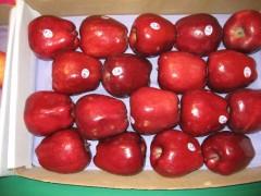 海利水果经营部是规模最大的苹果批发商 苹果价格专卖店