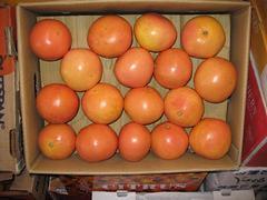 柳州哪里有橙子供应——橙子杨桃香梨樱桃代理商