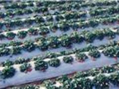 潍坊性价比高的白地膜供应:供应白色地膜
