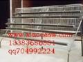 狐狸笼 鹌鹑笼 鸟笼 鸡鸽兔笼 鸽笼厂家 鸡笼厂家 兔笼厂家